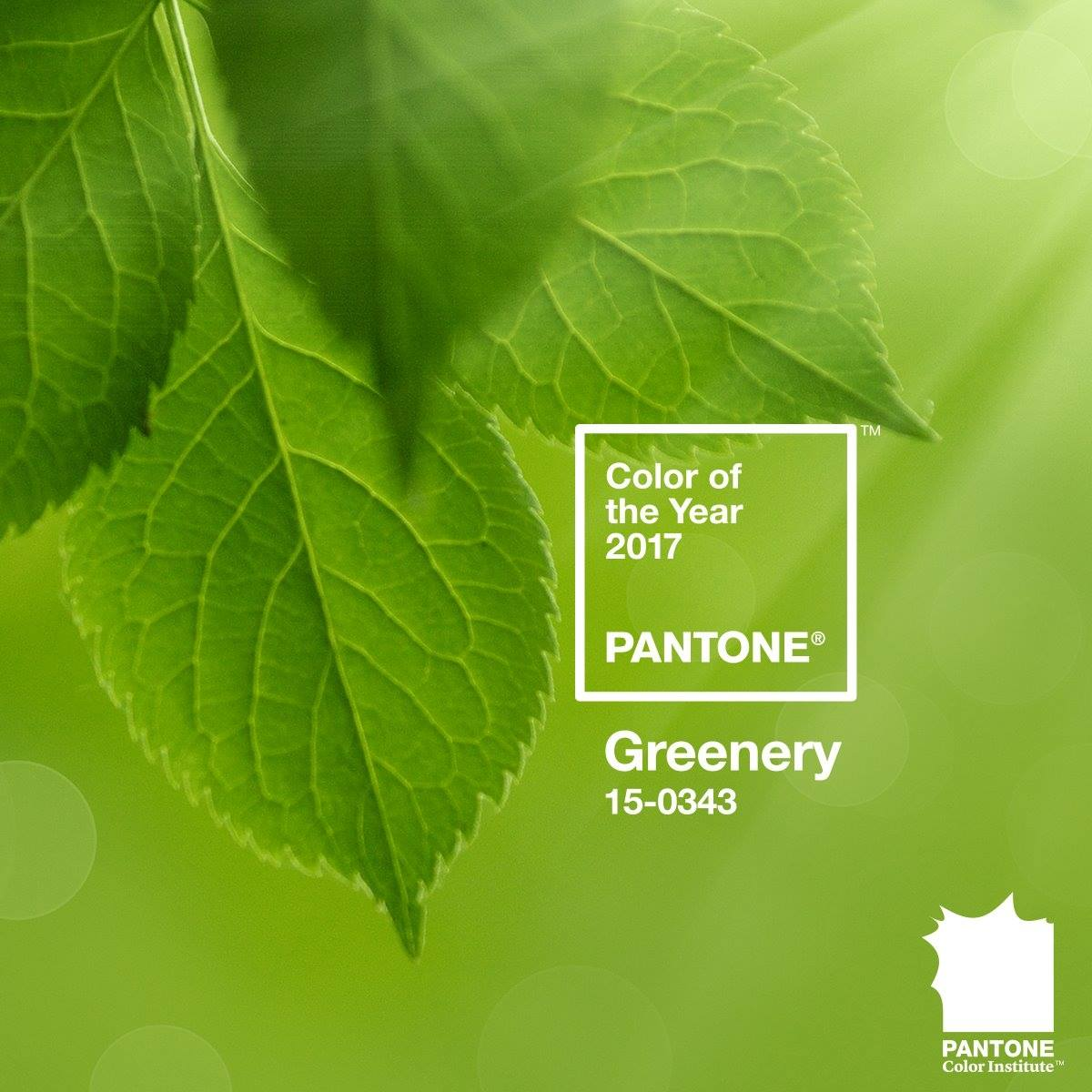 PANTONE Announces the 2017 Color of the Year, Greenery